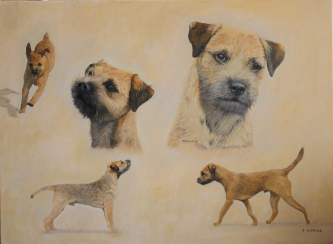 Freddy, border terrier
