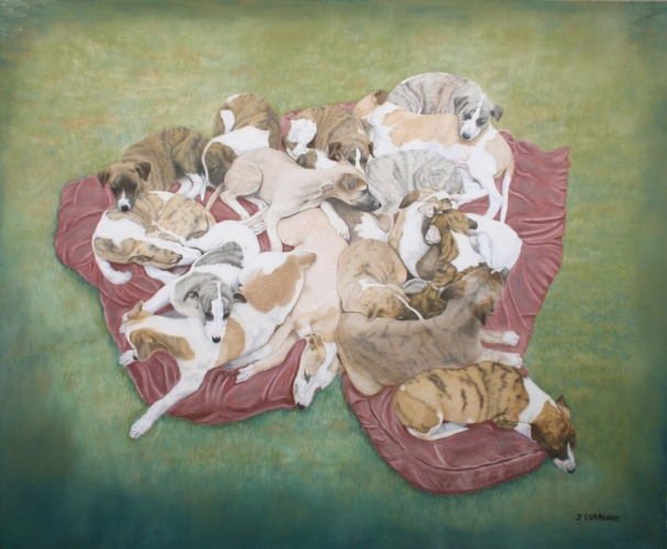 17 chiots whippet