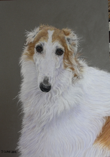 Portrait of a Barzoi