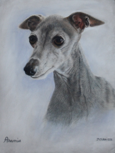 Aramis, italian greyhound