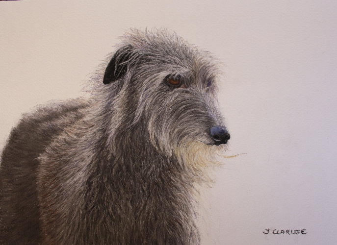 Scottish Deerhound portrait