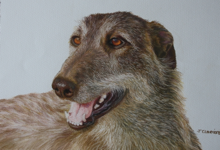 Obie the greyhound-deerhound of Ireland