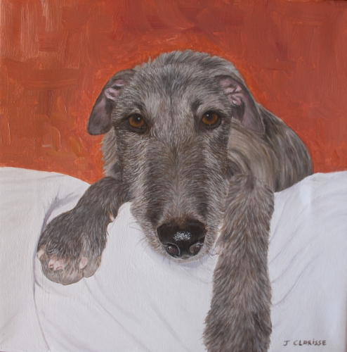Obie le greyhound-deerhound d'Irlande