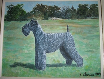 Kerry-blue terrier