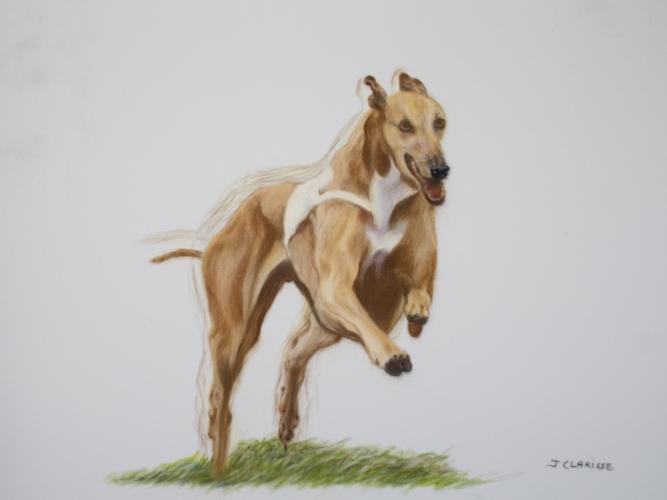 Poussée du postérieur du greyhound