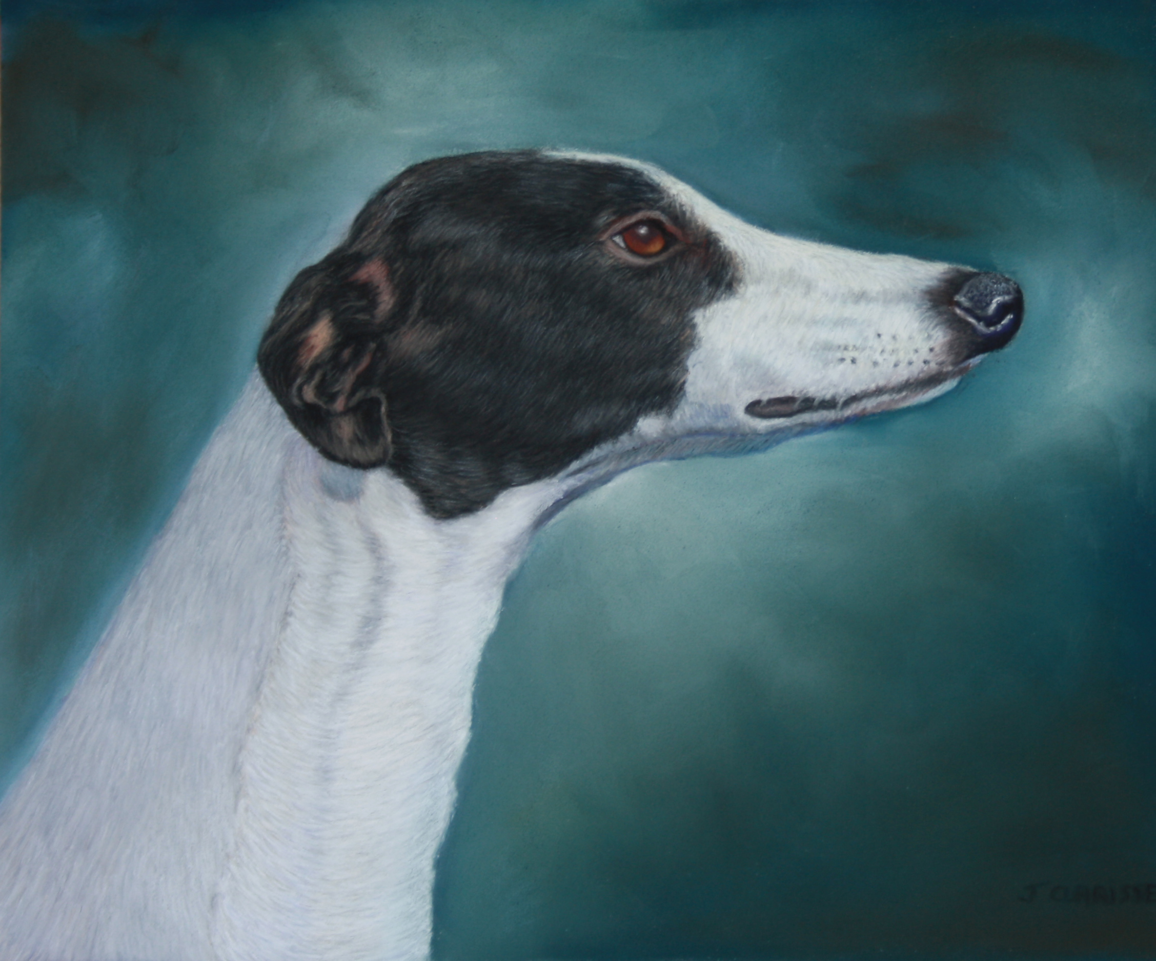 Portrait de Greyhound