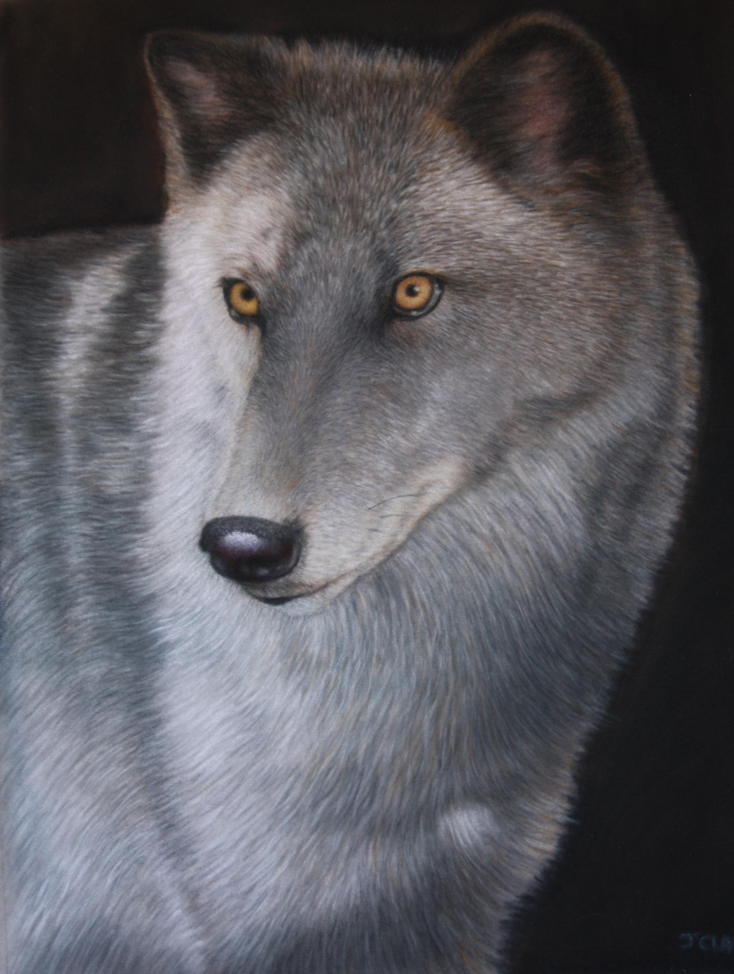 McKenzie wolf