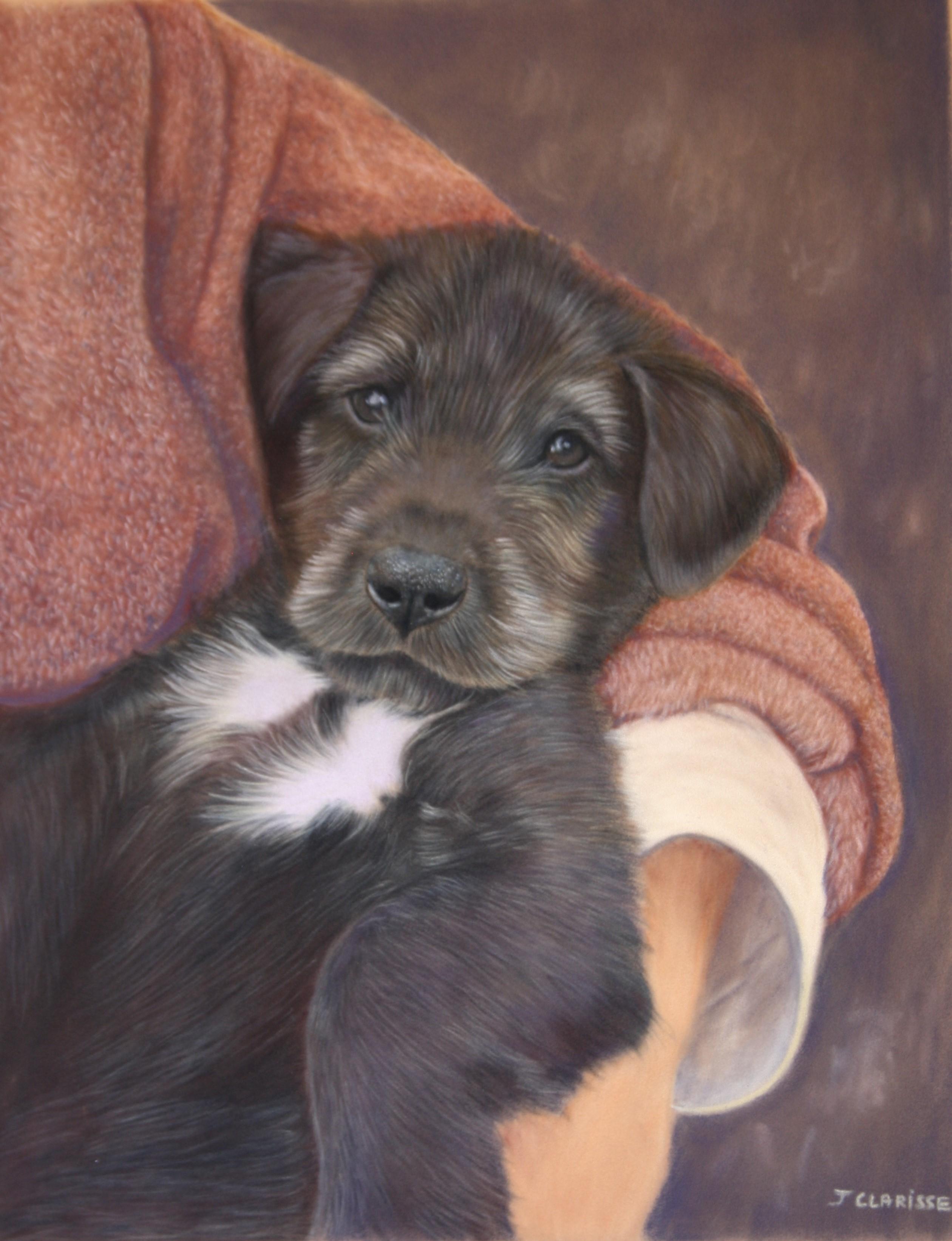 Victoria, Irish Wolfhound puppy