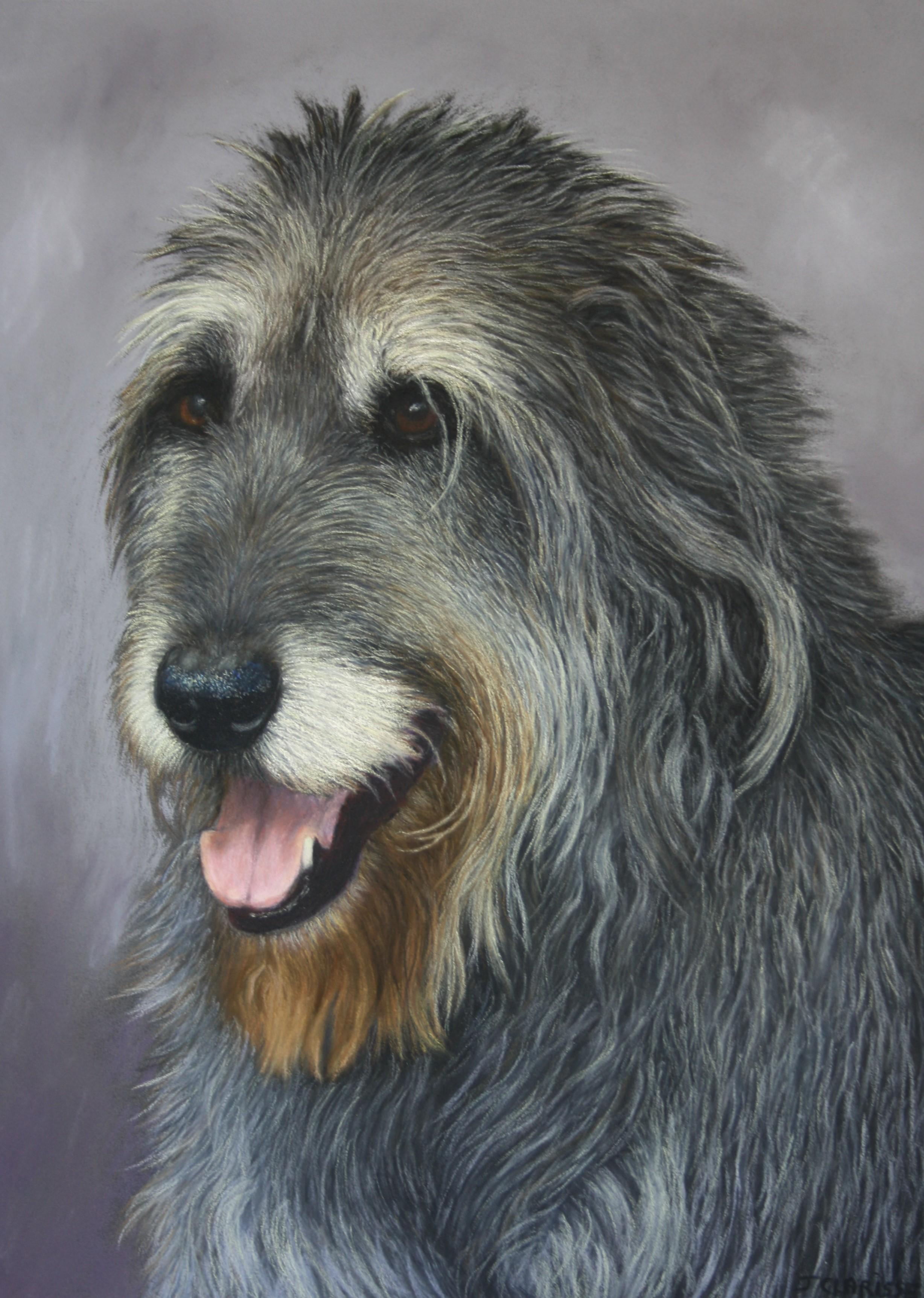 Molly (Irish wolfhound)