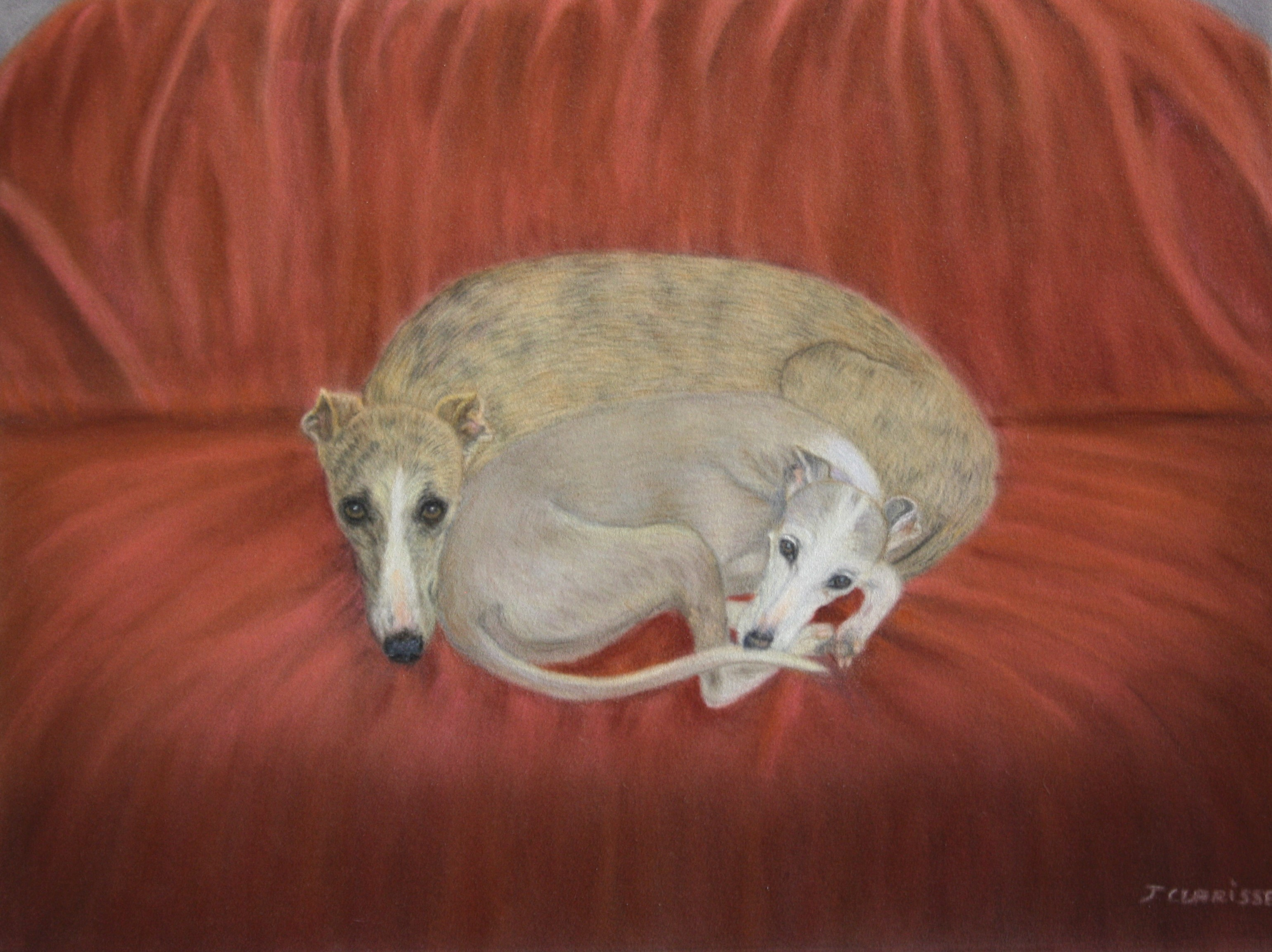 My two beloved whippets